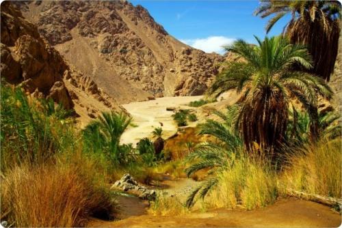 Египет: Незабываемый отдых в Египте, посещение всех местных достопримечательностей.